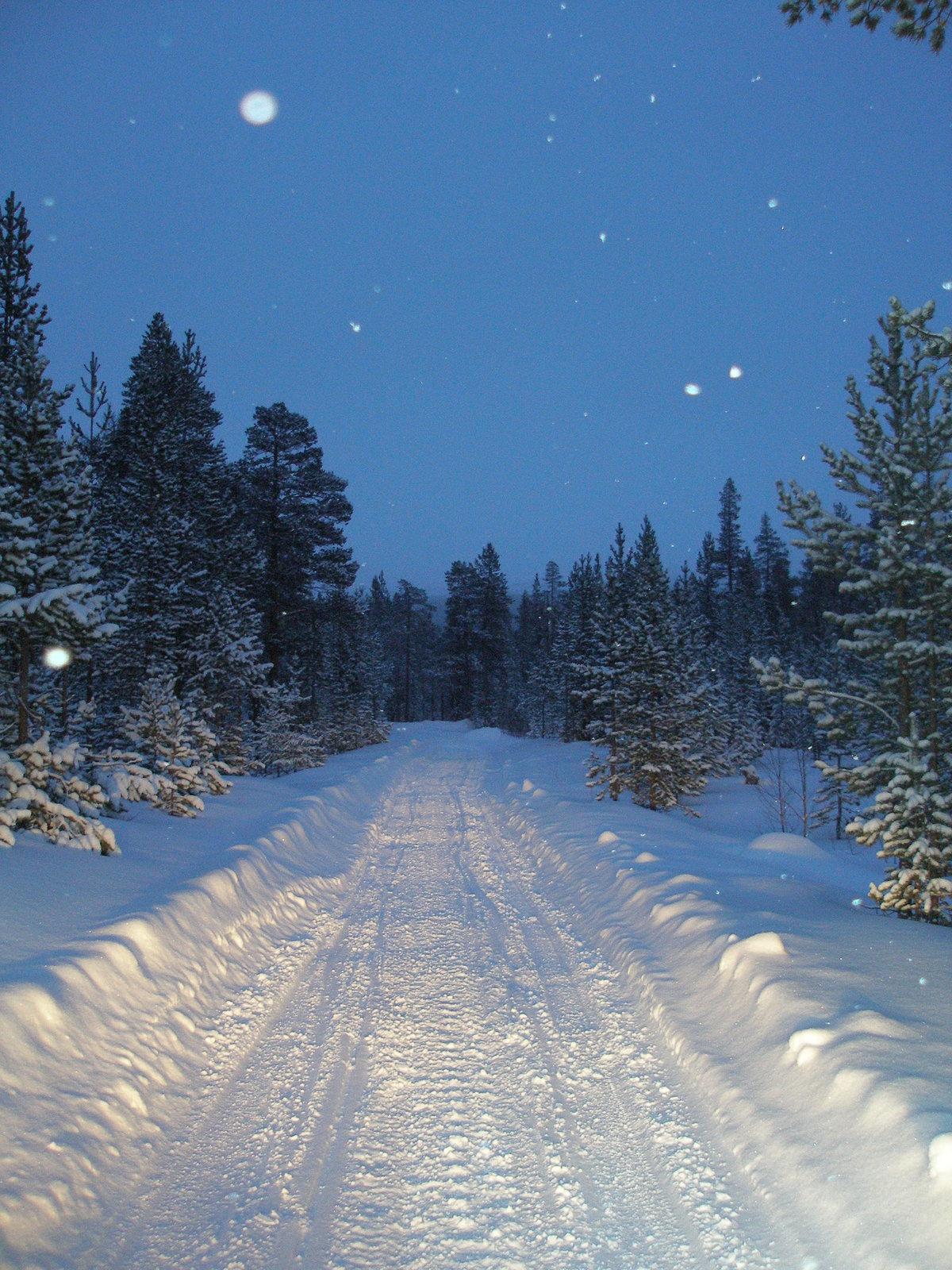 просто мне картинки зимний снежный коми лес предварительным данным