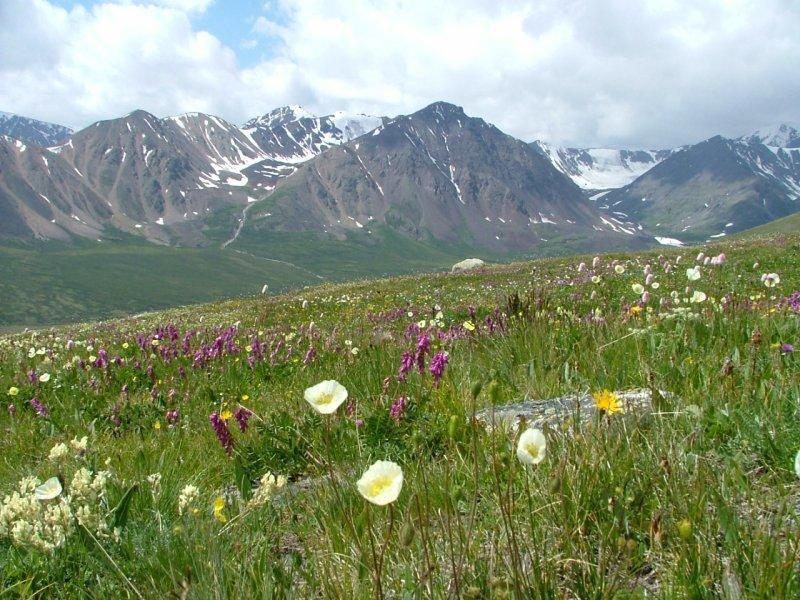 душевые фото растительного мира монголии человек