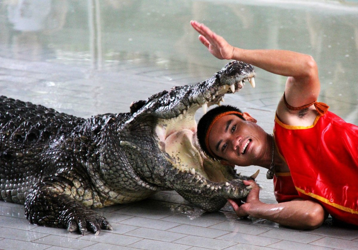 Юмор крокодила фото