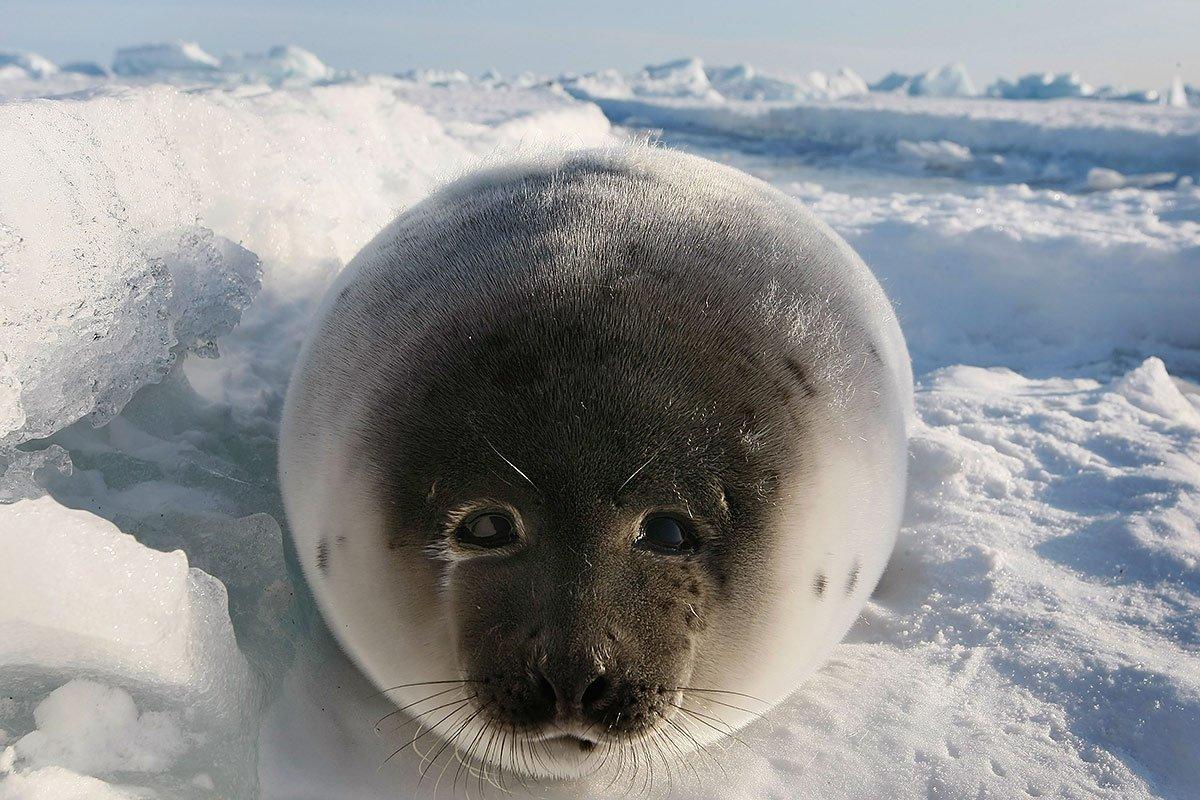 память покажи картинки морских котиков совершенно понимает, что