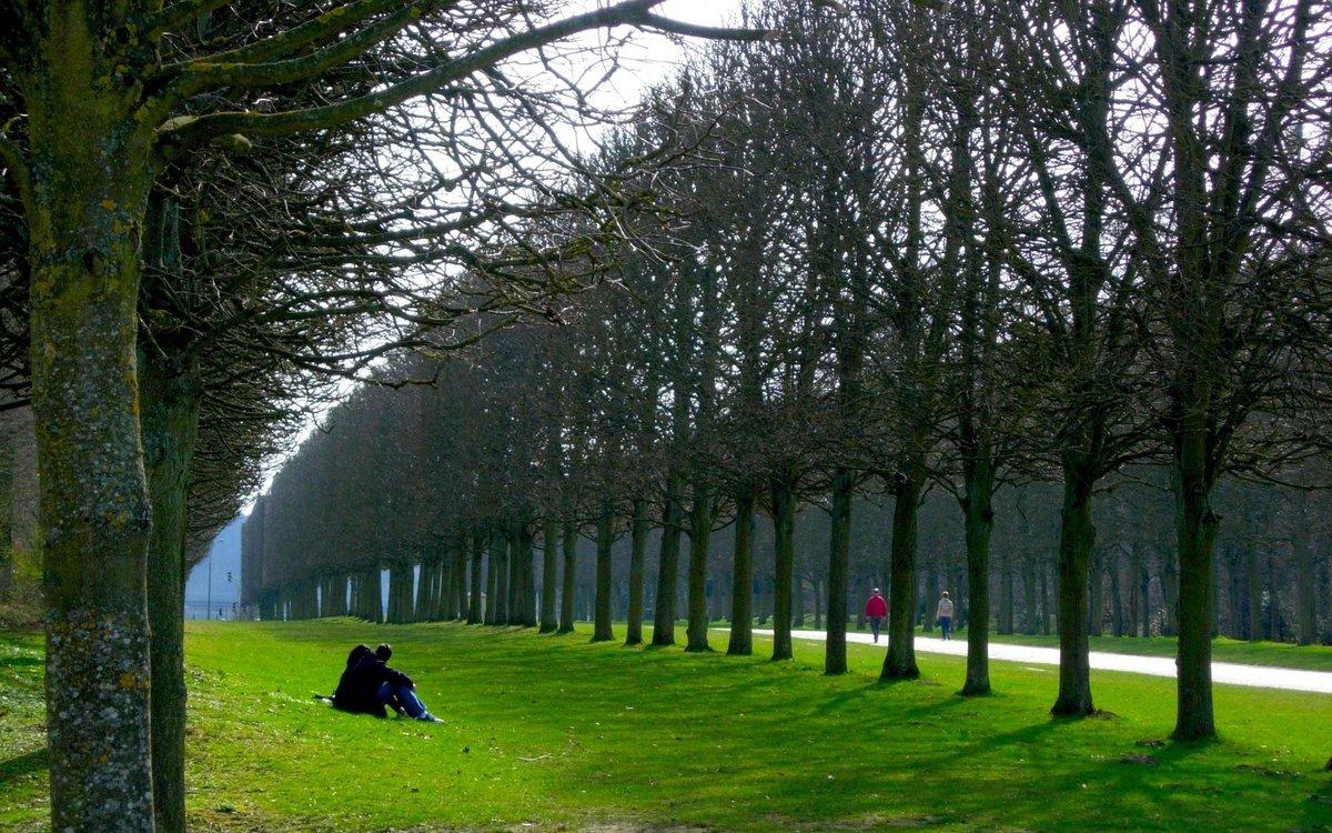 атенсьон в парке