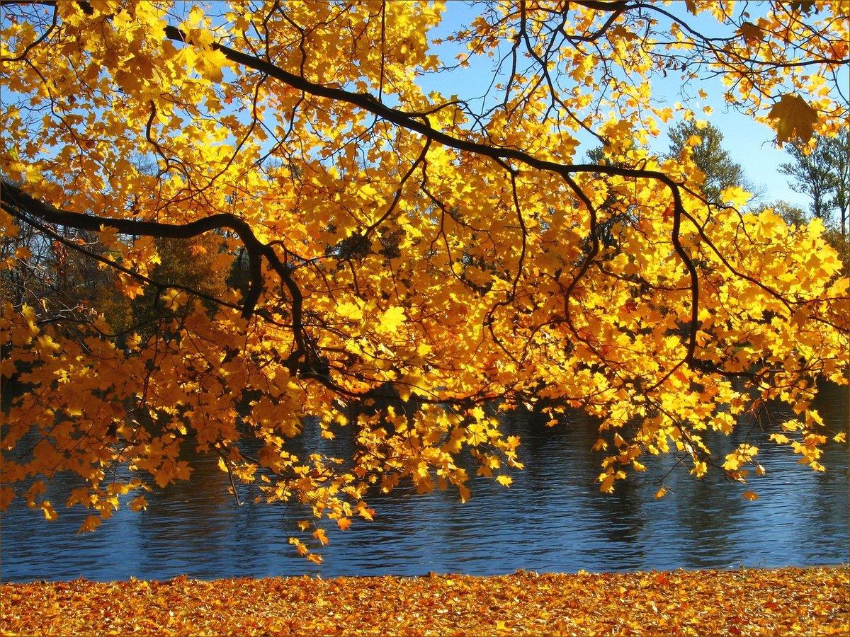 Картинки весне, открытки осень золотая фото