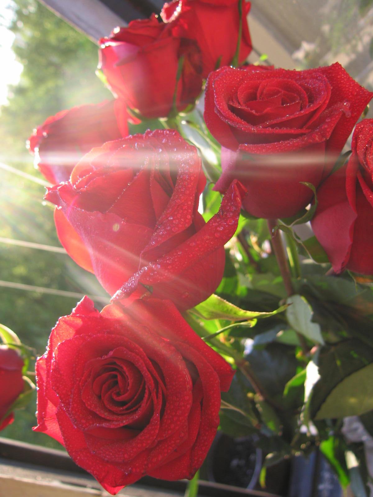 Поздравление днем, картинки утренние розы