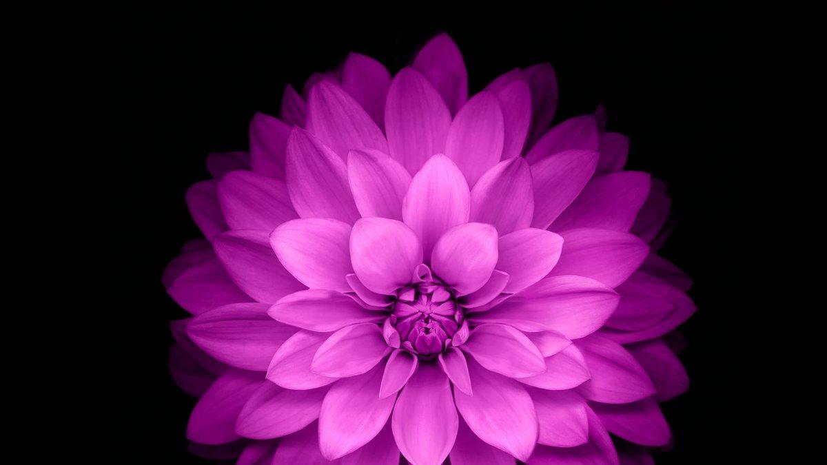 картинки цветка как на айфоне черном