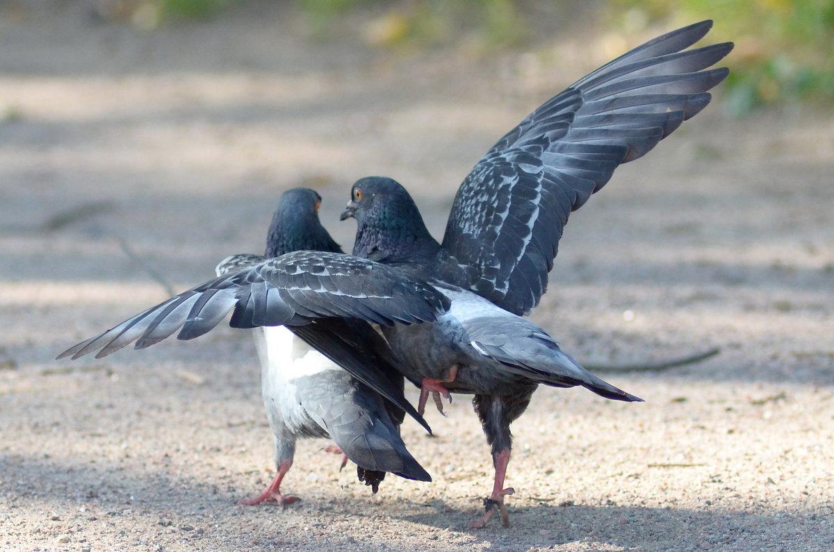 Приколы картинки голуби