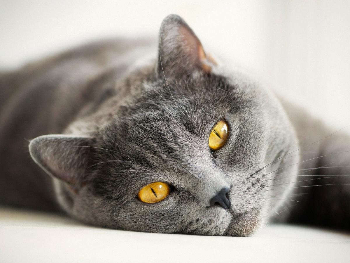 Фото кошек на рабочий стол, каской