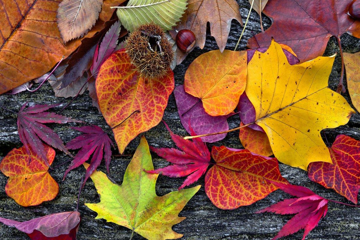 красивые картинки разных листьев фанаты