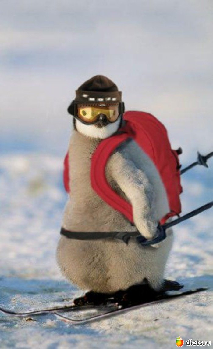 Новым, лыжник картинка смешная