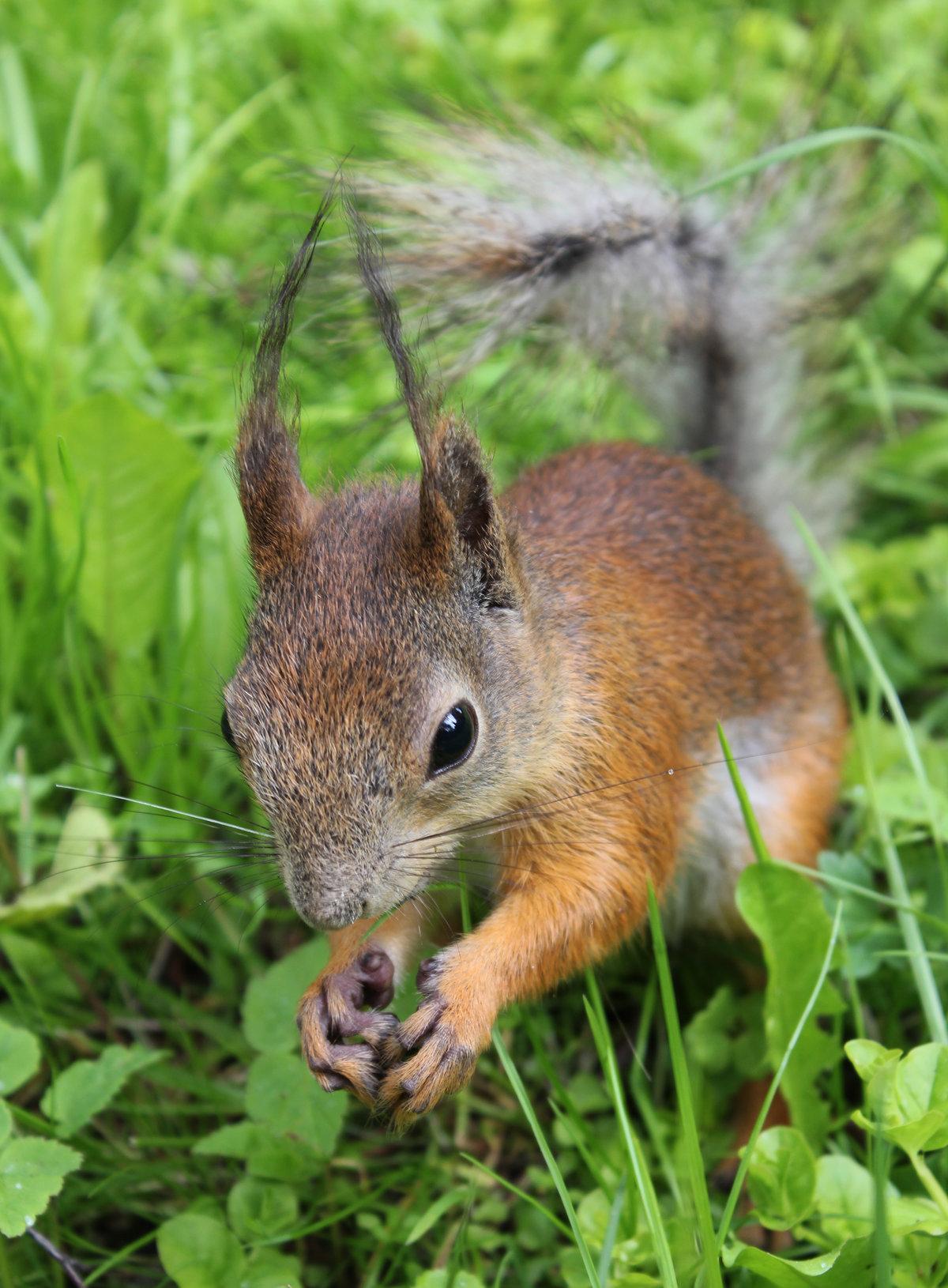 прогрейте сковороду, маленькие картинки лесных зверей зависит вида или