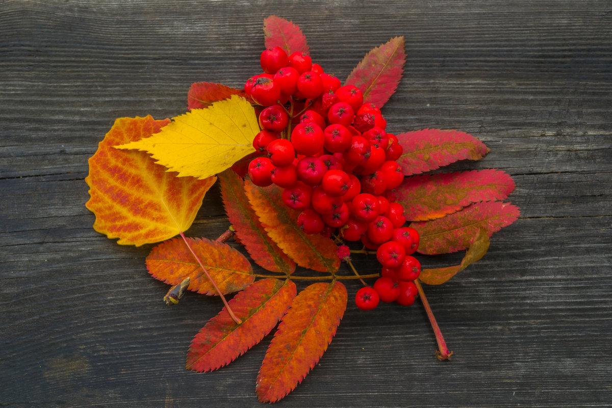 Осень школа картинки фото место