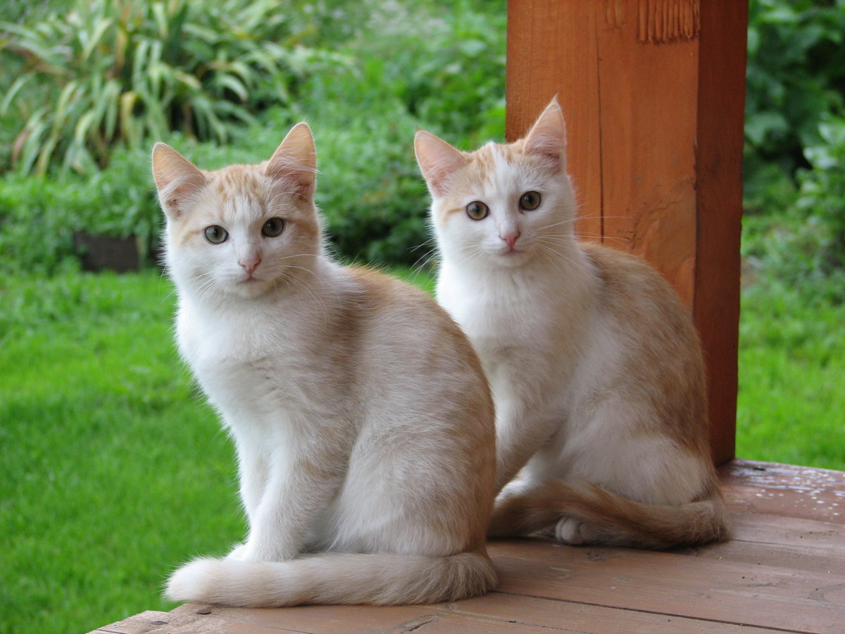 Cat twin found with dating app kcal la