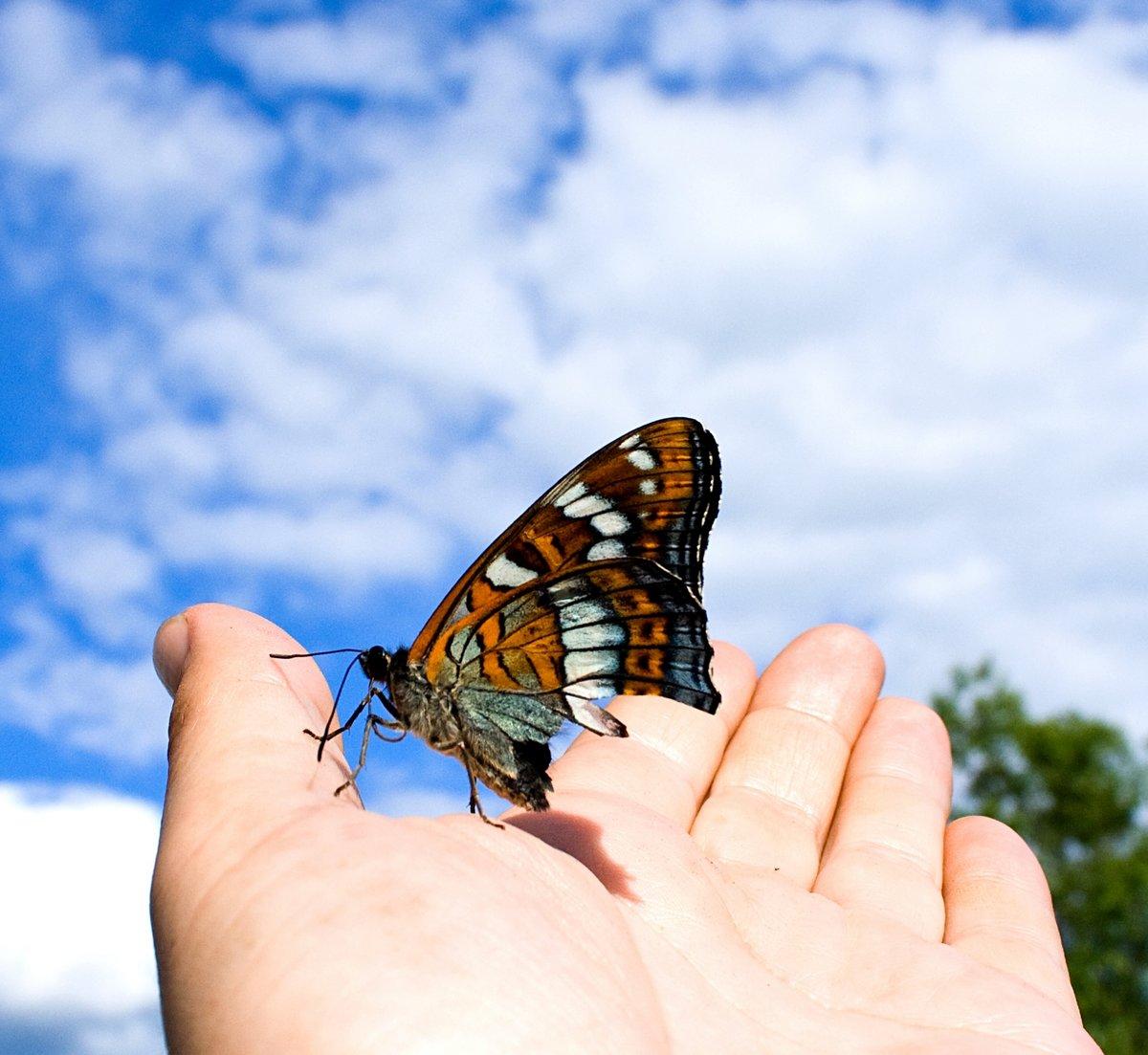 Улетающие бабочки картинки