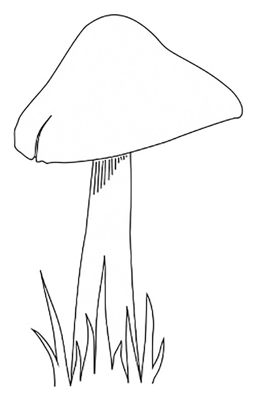 Картинки мухомор раскраска для детей