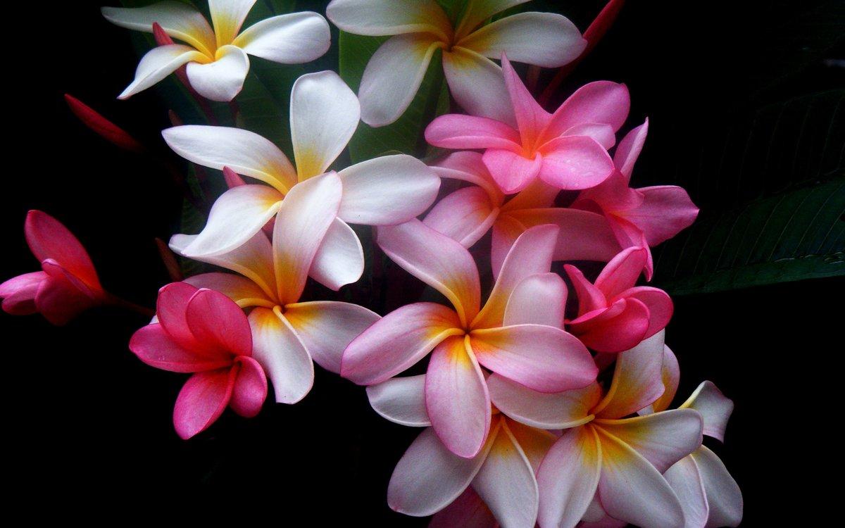 полноразмерный картинки для смартфона красивые цветы самых вкусных десертов