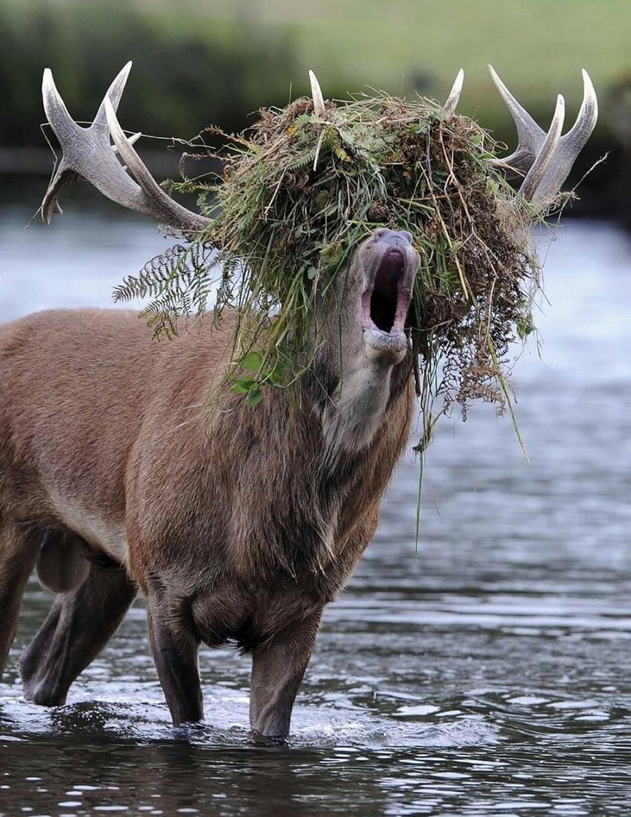 Открытка день, картинка прикольного лося