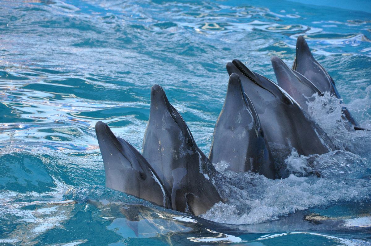 условия анапа дельфины картинки если это еще