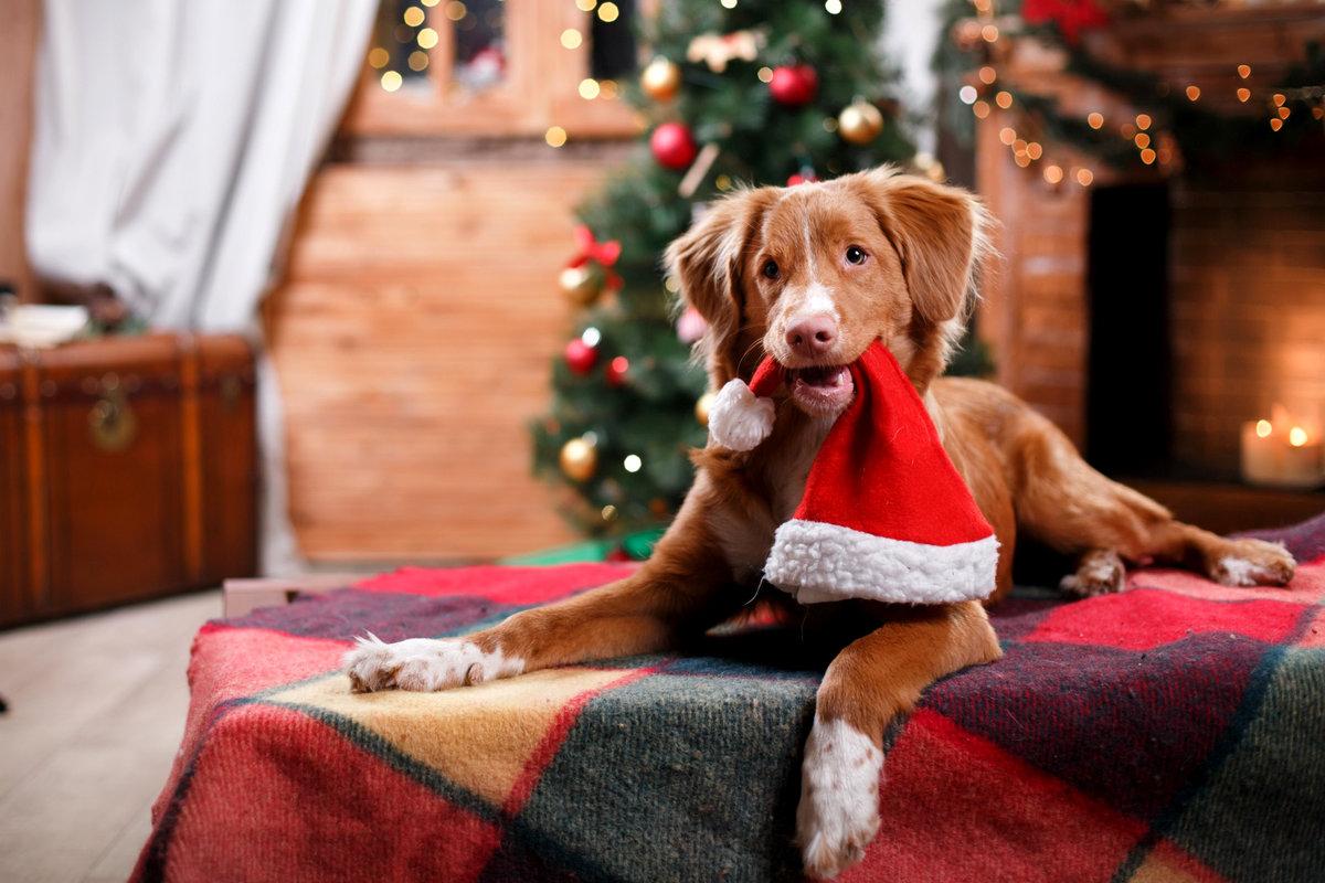 Новогодние картинки с собаками, голубями день