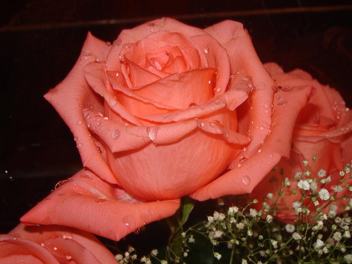 розы фото для любимой