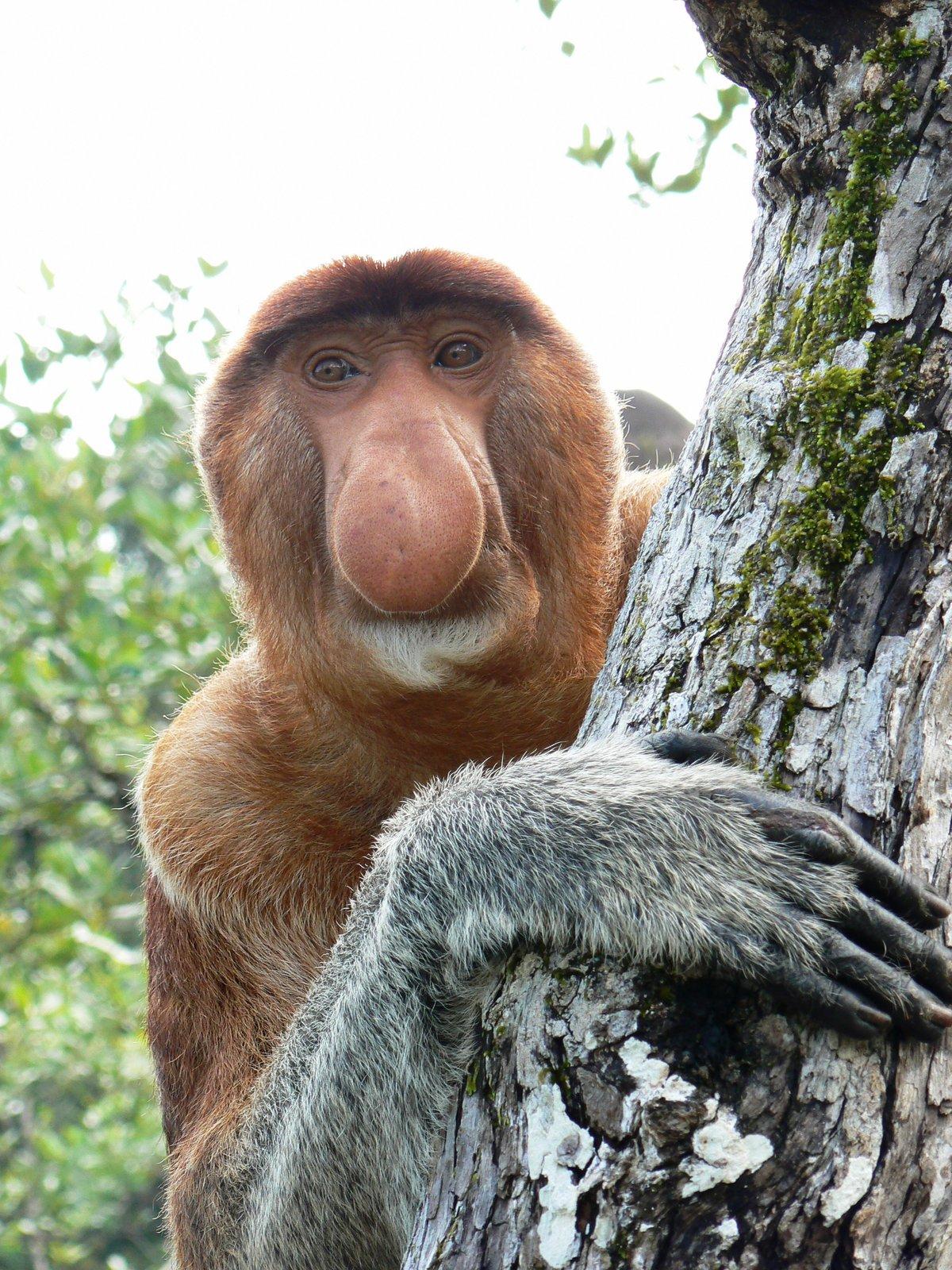 Картинки обезьян разновидности