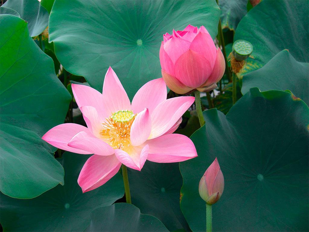 Редкий цветок в россии, букет тюльпанов