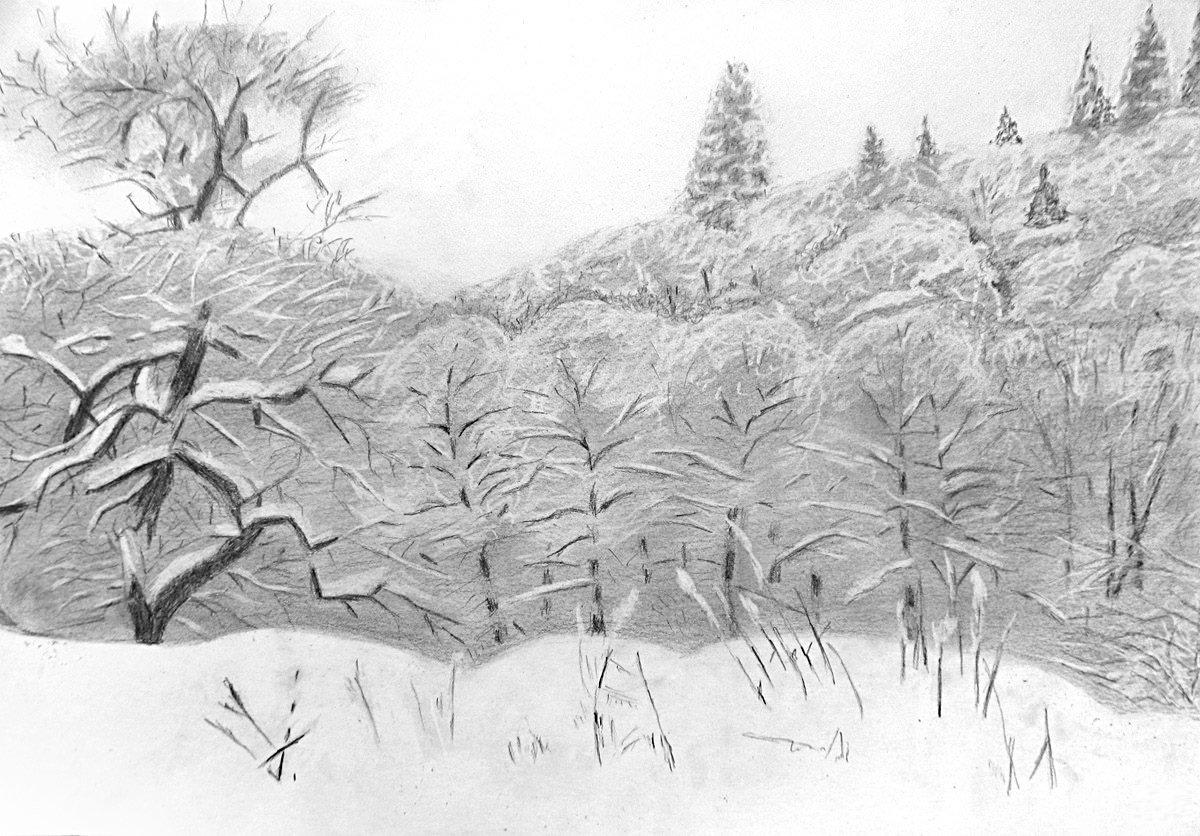Лес зимой рисунок легкий