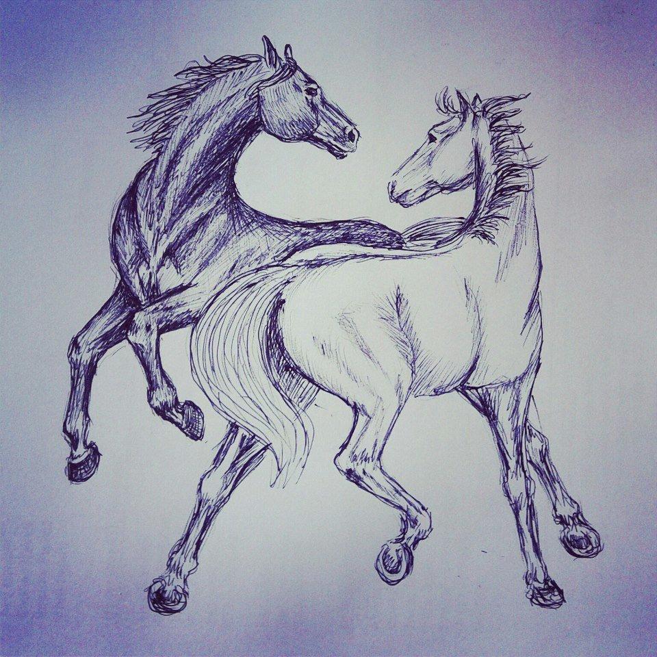 Крутые картинки лошадей для срисовки