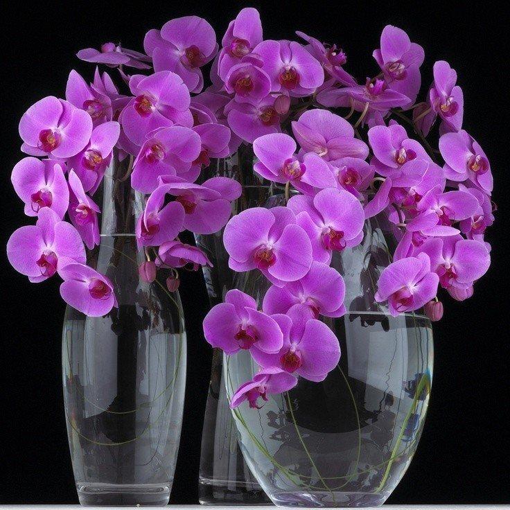 Мерцающие открытки орхидея, открытка февраля