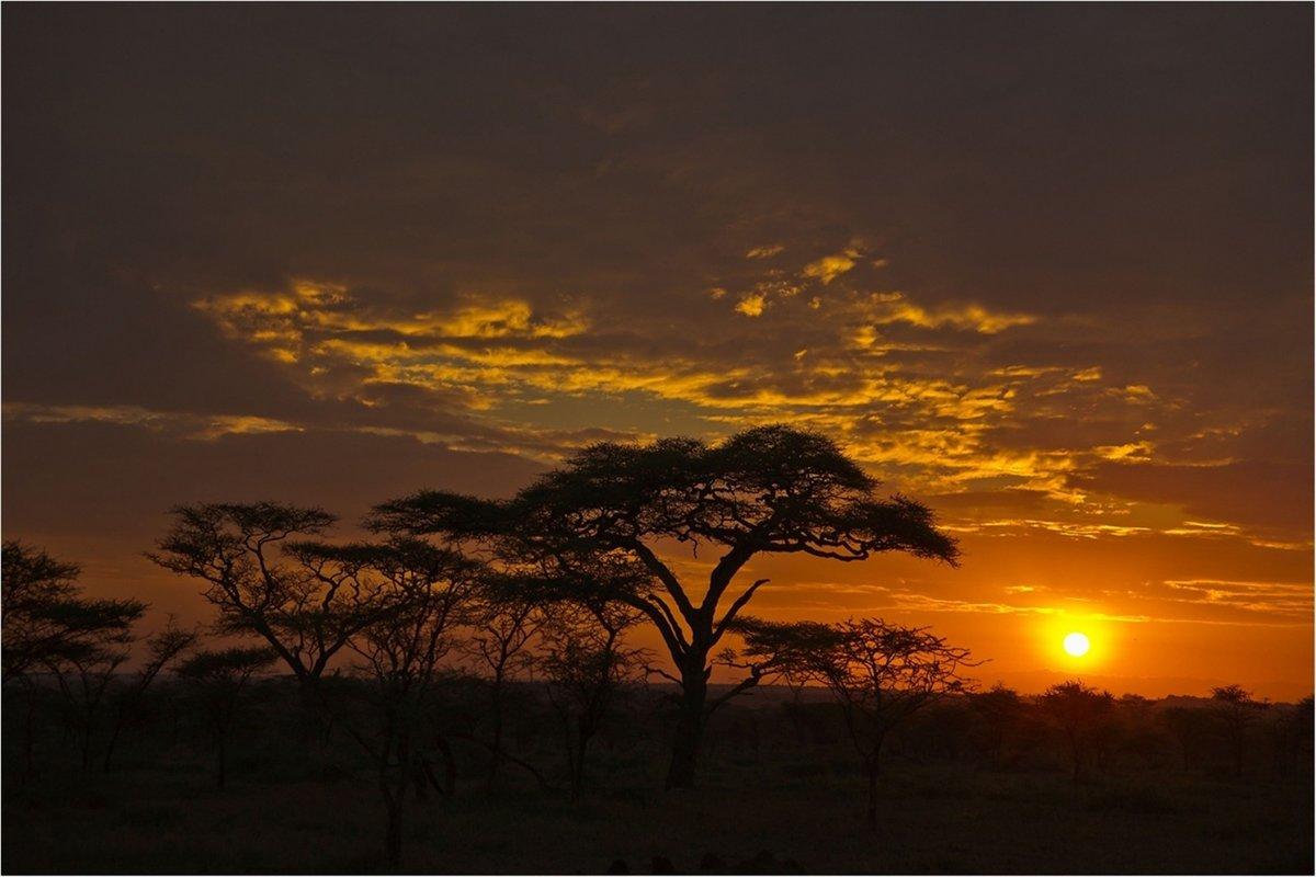 африка ночью фото преклонном возрасте