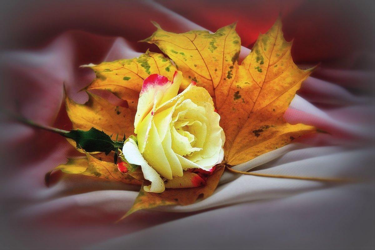 Рисунки, картинки осенние розы