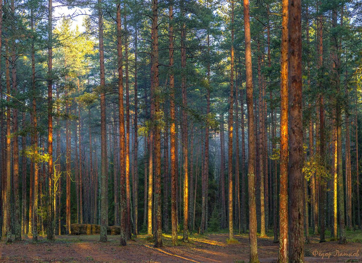 Качественные фотографии российского леса