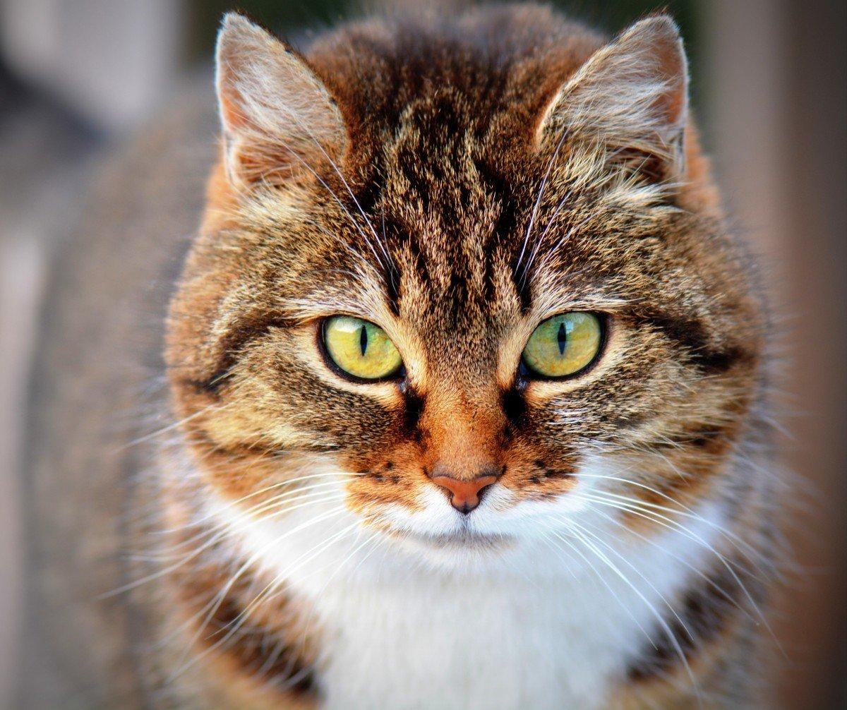 Картинки про кошки, надписью