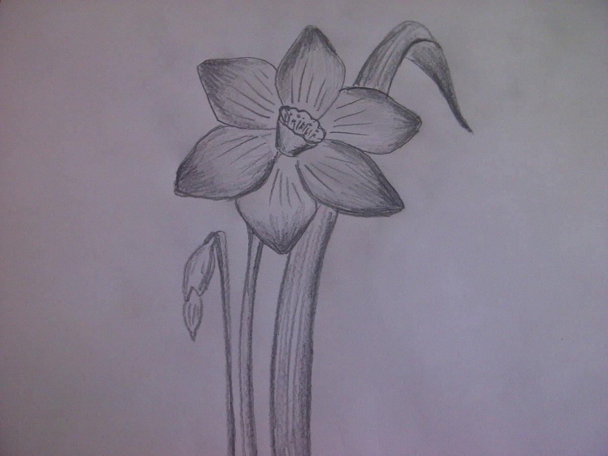 Картинки для цветочных сайтов уже говорю