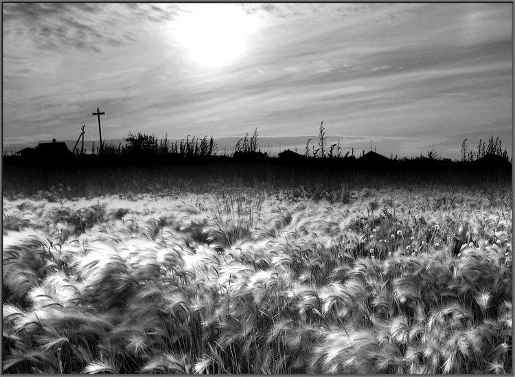 красивые картинки лето черно белое началова