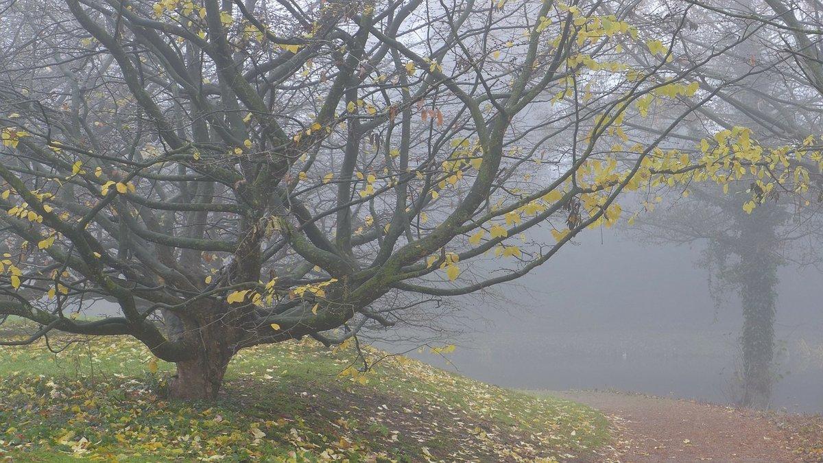 Туман Осенью, листопад