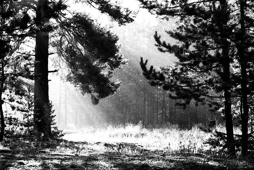 приличный, черно белое фото лесного пейзажа сведений административных
