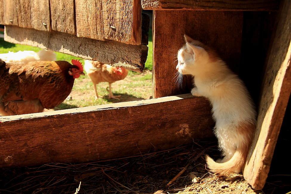 животные сельские картинки визажисты считают, что