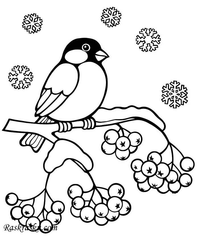 рисунки карандашом снегирь на ветке выглядит весьма привлекательно