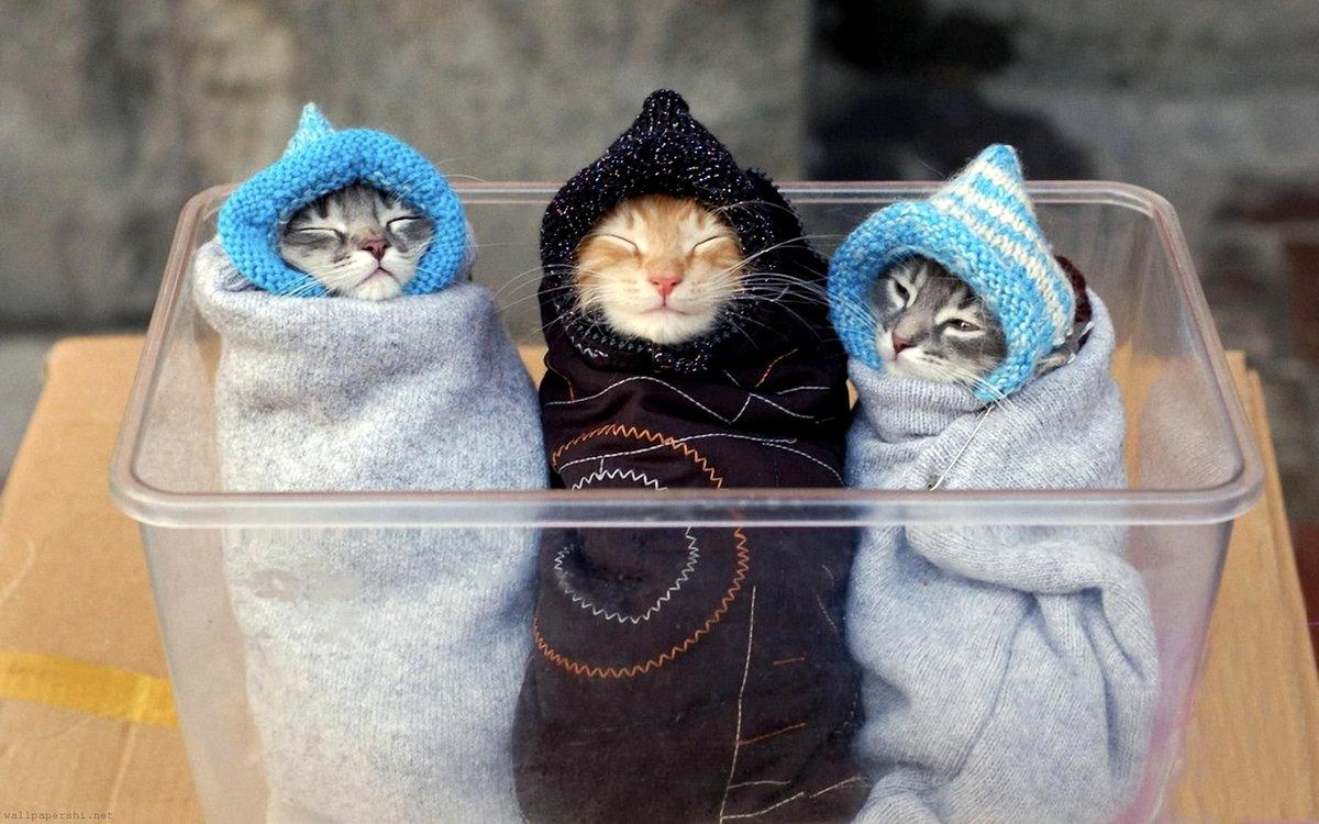 Открытки, картинки котенка приколы
