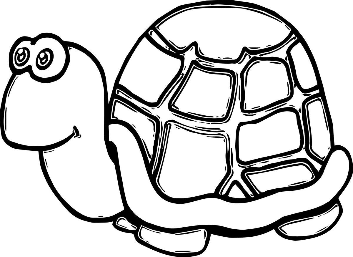 Kaplumbağa Boyama Sayfası Okulöncesitr L Preschool Card From User