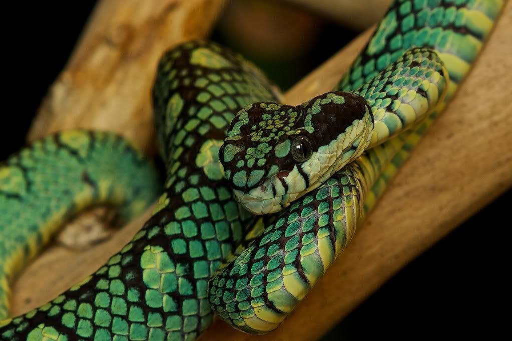 хотите фото картинки змей видно фильме грозовые