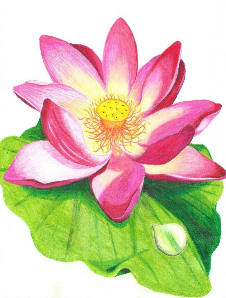 Картинки рисованные цветы крупные
