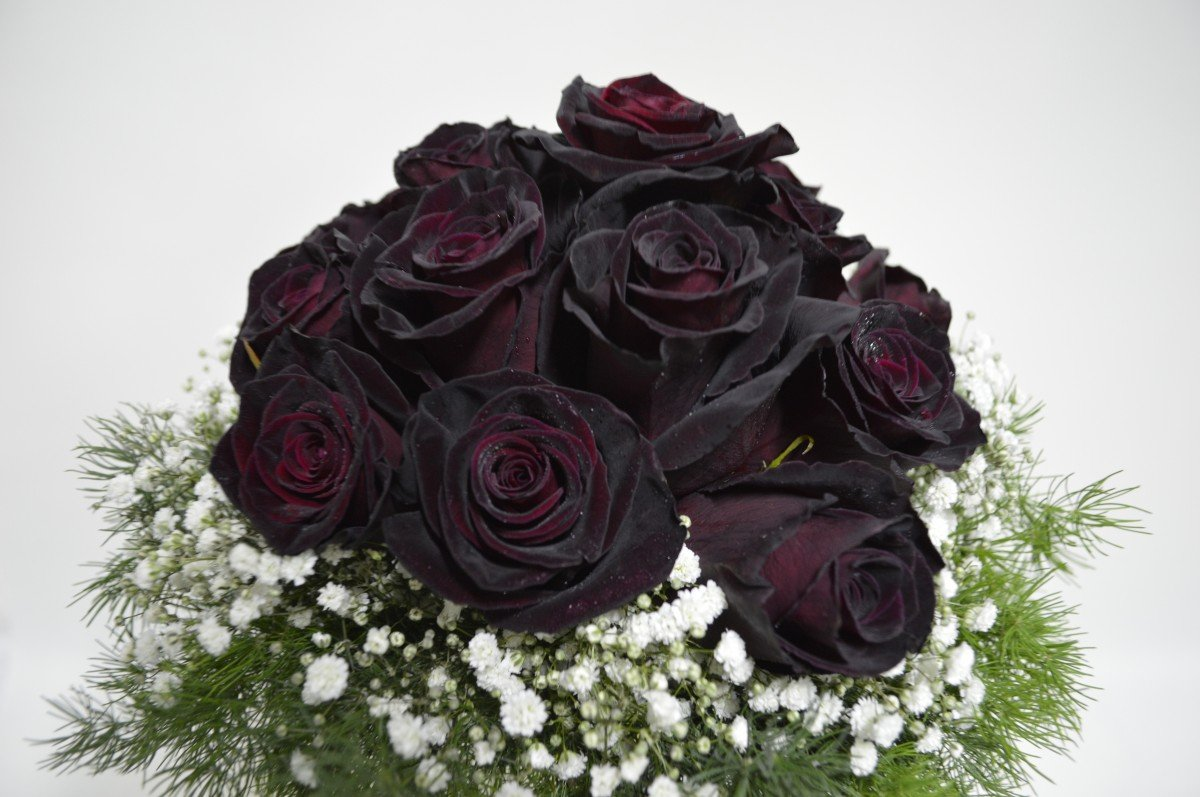 чтобы масло красивые картинки розы черные красной