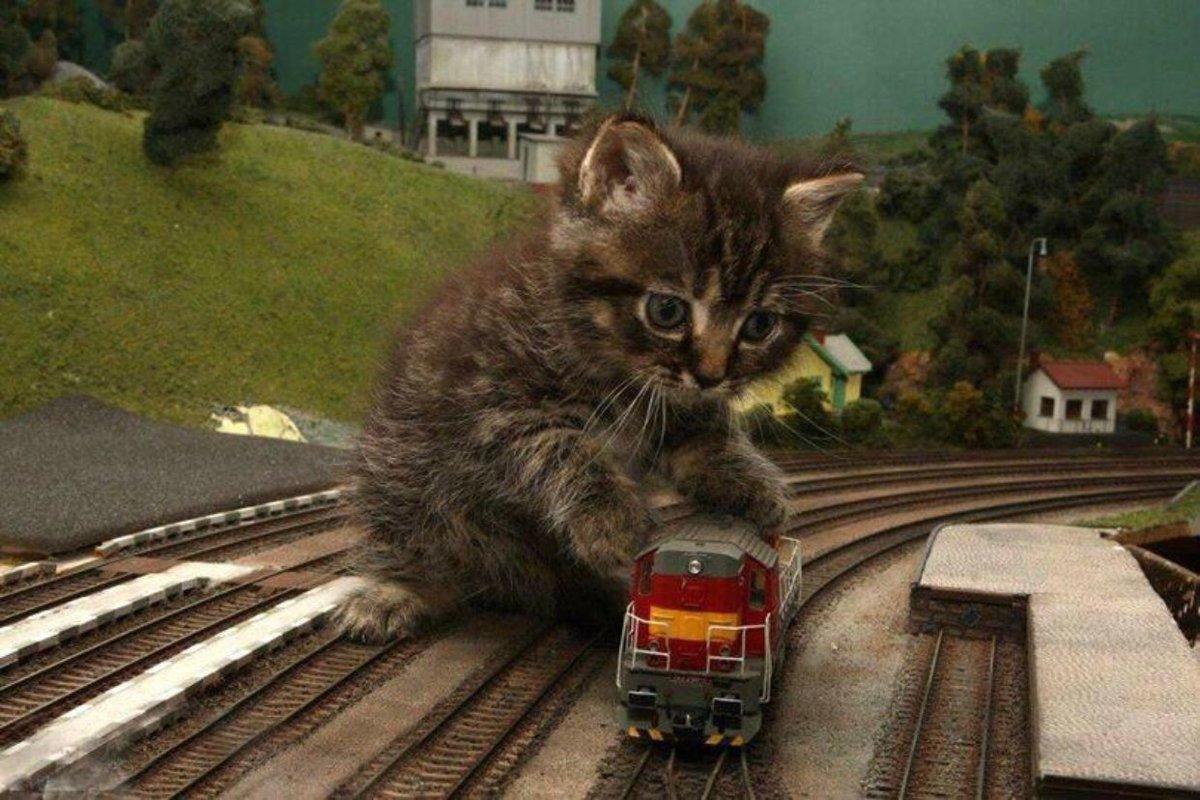 Открытки, картинка поезда смешная