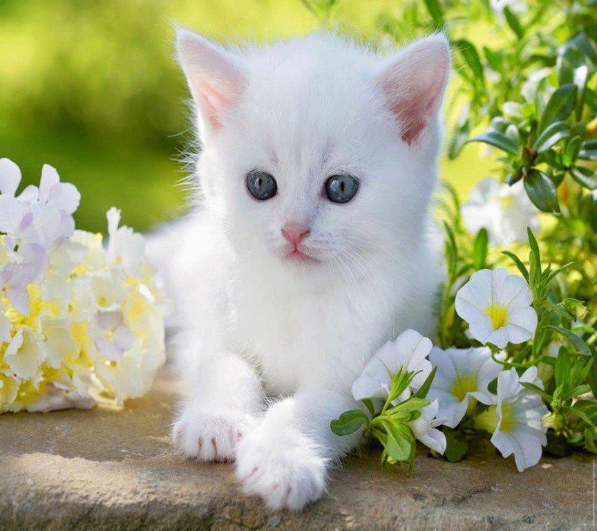 Красивые кошечки на картинке