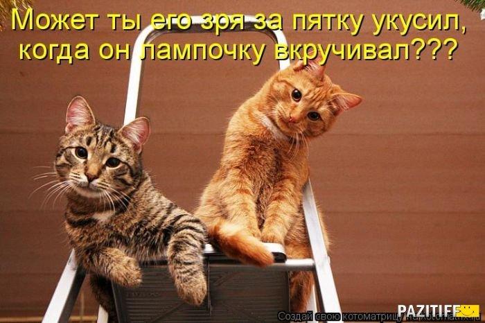 Картинки про котят с надписями смешные