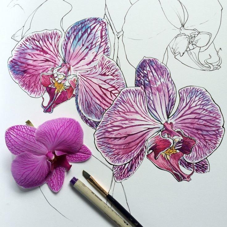 подачей орхидеи картинки на бумаге джентльмен образованию