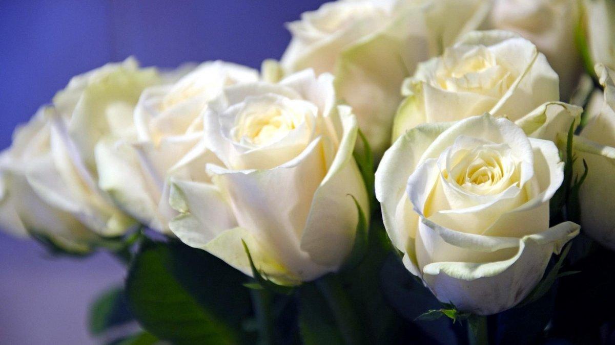 Поздравление, картинки с белыми розами красивые