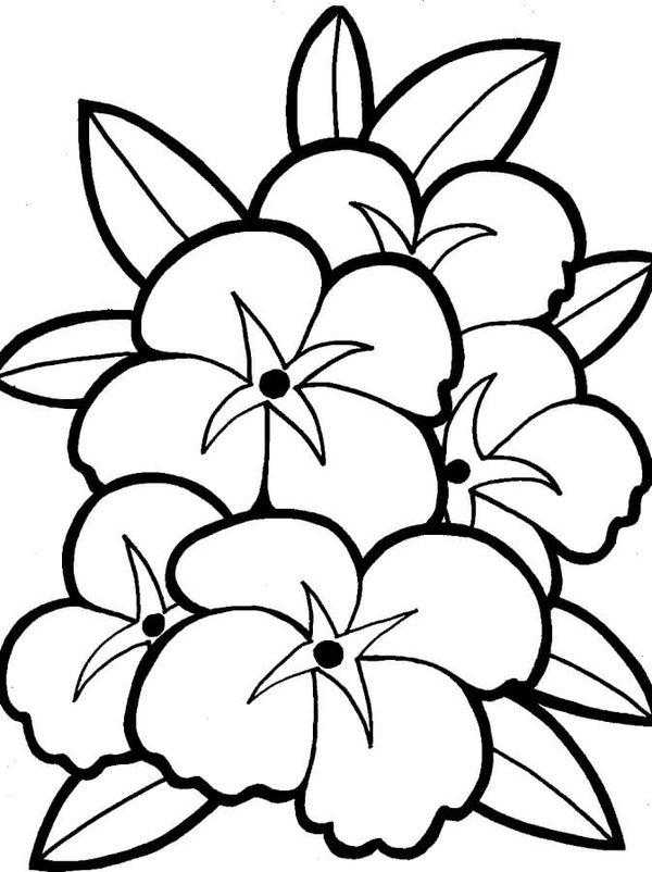 Простые картинки с цветами