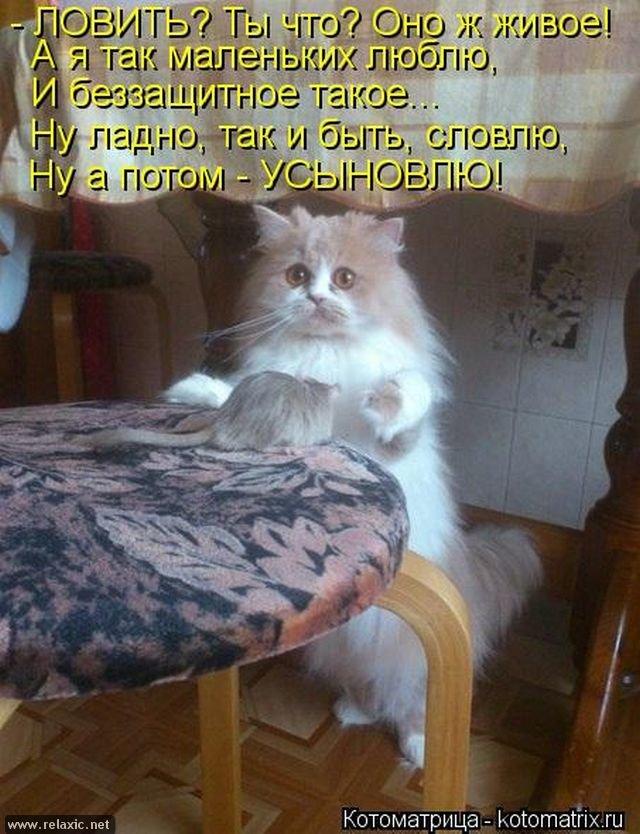 Открытка, картинки с кошек с надписями смешные до слез