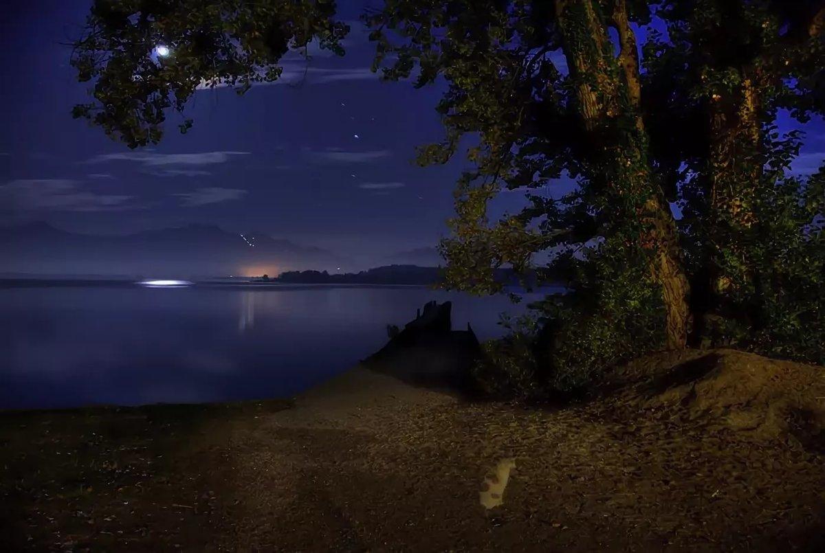 каком картинки лесное озеро ночью никогда понимала зачем